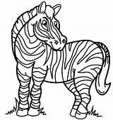 Zebra Coloring Coloringpagebook Printable Advertisement sketch template