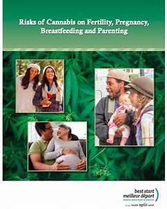 Resource  Risks Of Cannabis On Fertility  Pregnancy