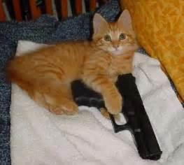 cat gun my child is crasstalk