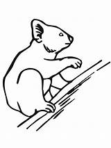 Koala Pages Coloring Bear Tree Printable Climbing Drawing Easy Brothers sketch template