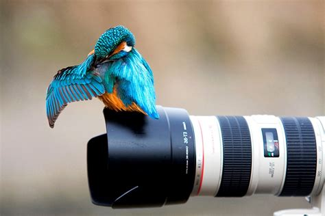 Birds, Kingfisher, Photography, Camera, Animals, Canon Wallpapers Hd / Desktop And Mobile
