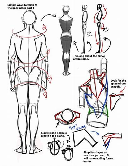 Reference Drawing Anatomy Human Draw Tips Character