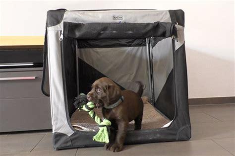 hunde welpen schnell  hundebox transportbox gewoehnen