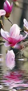 Elefantenhaut Auf Putz : blumen magnolienbl ten spiegeln sich im wasser selbstklebende wall stripes online im shop ~ Yasmunasinghe.com Haus und Dekorationen