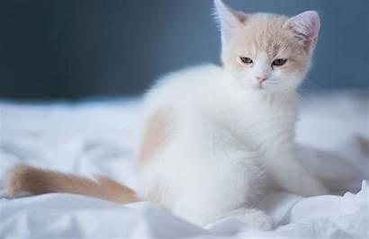 Cat Sleepy Cats Wallpapers Animals Kitten Lovely
