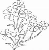 Coloring Flower Pages Breath Jasmine Spinach Periwinkle Plant Drawing Babys Flowers Cosmos Roses Parts Colouring Opposites Printable Drawings Getcolorings Cross sketch template