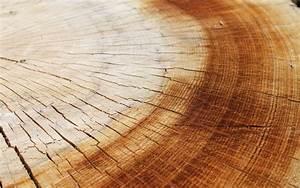 Tree-rings wallpaper - 581635