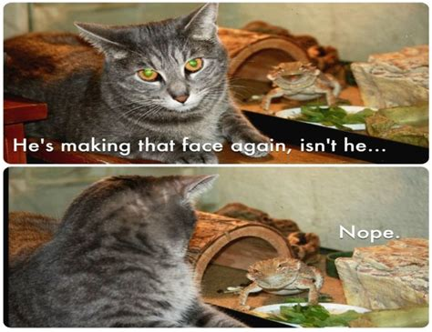 Cat Meme Quote Funny Humor Grumpy 120 Wallpapers Hd