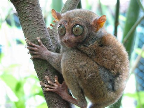 Top 20 Ugly Animals That Are Cute Fun Facts You Need to