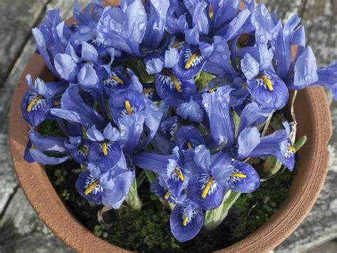 d hiver en pot jardin d hiver en pot plantes ornementales 224 privil 233 gier trucs et astuces