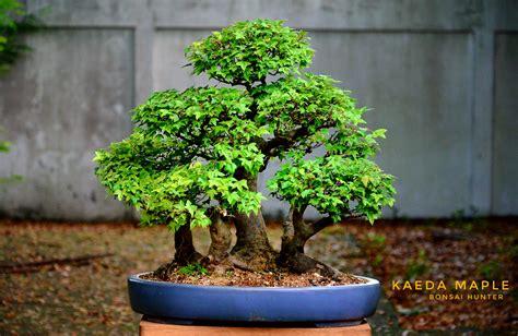 DSC_1223 (1)-01 - บอนไซ บอนไซญี่ปุ่น