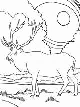 Elk Coloring Mountain Rocky Printable Clipart Library Deer Horse sketch template