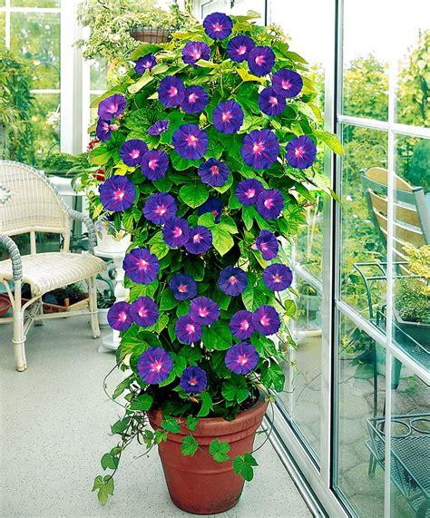 les 25 meilleures id 233 es de la cat 233 gorie plante grimpante sur treillage jardin