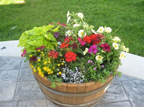 wine barrel planter ideas 17 best images about whiskey barrel flowers on