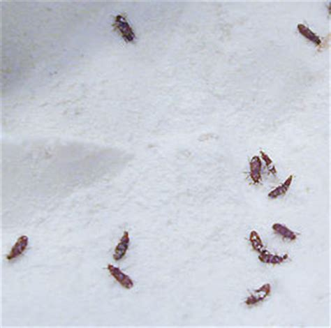 tiny brown bugs in kitchen cabinets insects in your food pantry nebraska extension in 9478