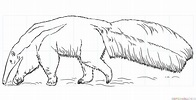 How to draw an anteater   Step by step Drawing tutorials