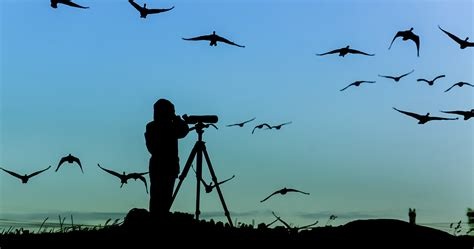 Bird Watching | Northumbria Coast & Country Cottages Ltd