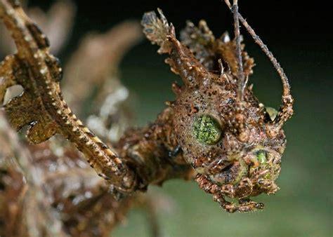 run   moss monster   black lagoon