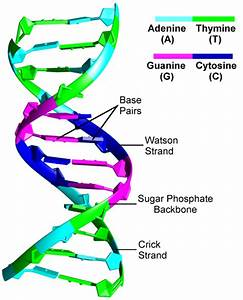 1  The Structure Of Dna Double Helix  206