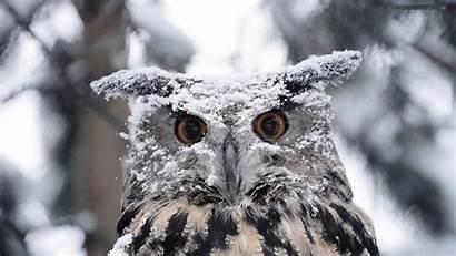 Owl Cute Wallpapers Pixelstalk
