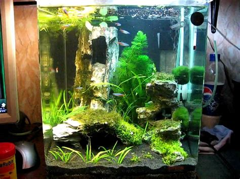 dennerle nano cube 30l 15 02 10 9day after start fish