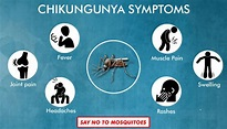 Chikungunya - Signs, Symptoms, Complications & Prevention ...