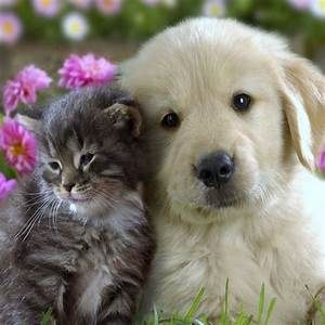 Dog And Cat Love | HD Wallpapers
