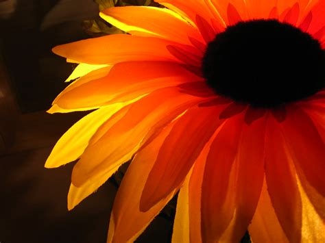Black And Orange Flower Wallpaper by Nature Flowers Orange Flower Petals Wallpaper 2048x1536