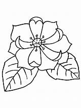 Magnolia Coloring Flower Flowers Printable Getcolorings Pa Recommended Colors sketch template