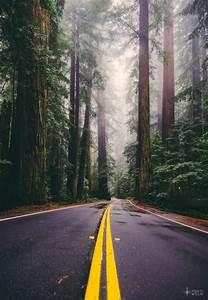 Follow Me Home : follow me home avenue of the giants redwoods national park california where to willie ~ Medecine-chirurgie-esthetiques.com Avis de Voitures