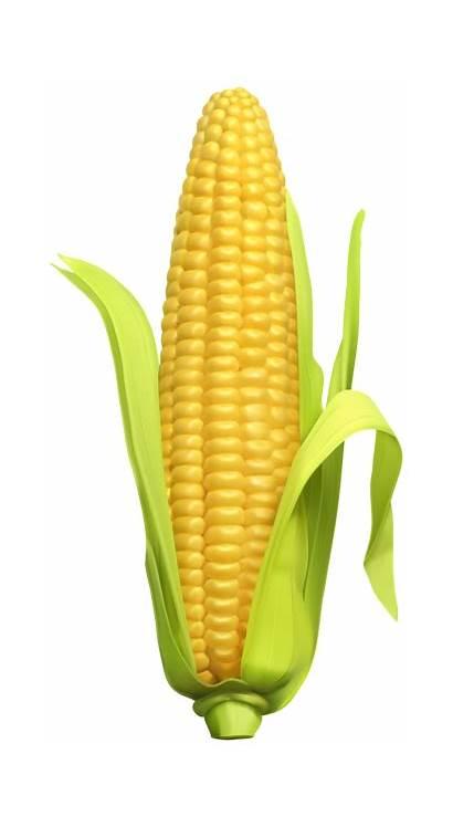 Corn Clip Clipart Vegetables Transparent Yopriceville