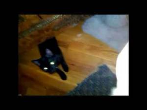 OMG! Kitten dragged under dresser by REAL demon LOOK!