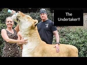 THE UNDERTAKER visits Myrtle Beach Safari