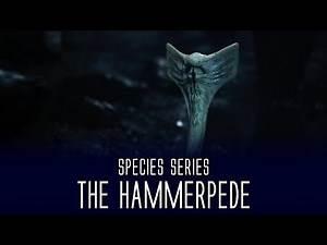 Hammerpede - Species Series