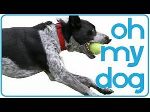 Oh My Dog! Superhero Dogs and Puppies Compilation
