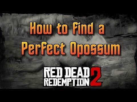 RDR2 - How To Find A Perfect Opossum
