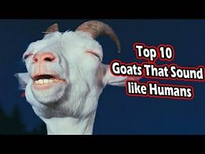 top 10 goats yelling like humans (animals that sound like humans)