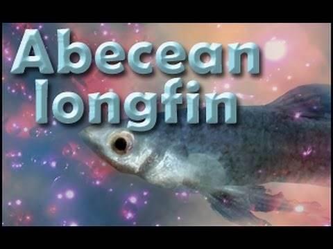 Skyrim Where to find Abecean Longfin.