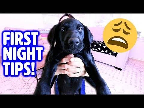 First Night with NEW PUPPY! 🤗 How to Survive Your First Day Home