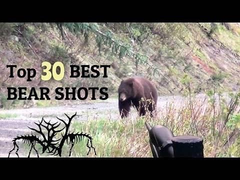 TOP 30 BEST BEAR HUNTING KILL SHOTS