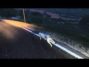 Grand Theft Auto V Peyote Plant: Mountain Lion (HQ)