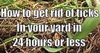 How to get rid of ticks in your yard in 24 hours or less