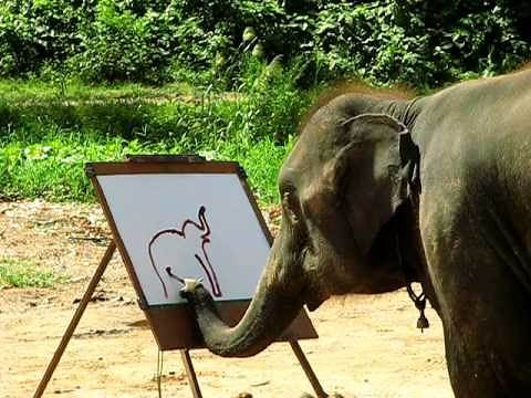 Suda - The Painting Elephant