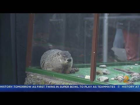 Groundhogs Predict Early Spring