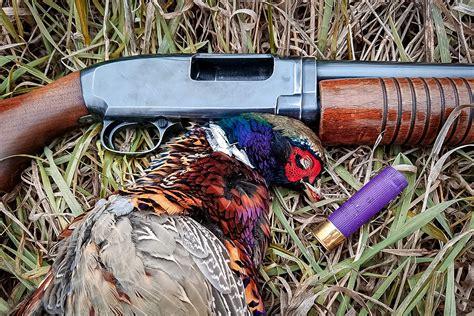 16 Gauge Shotgun Hunting