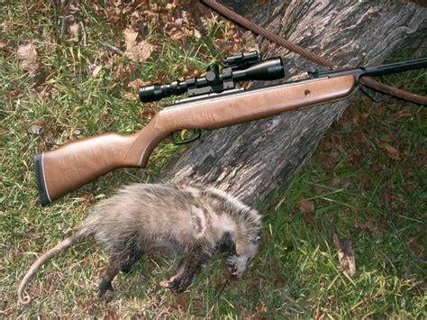 22 Cal Air Rifle Raccoon
