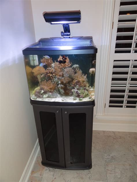 29 Gallon Biocube Stand Diy