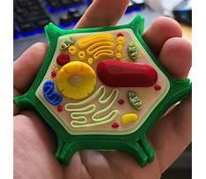 Best 3d plant cell