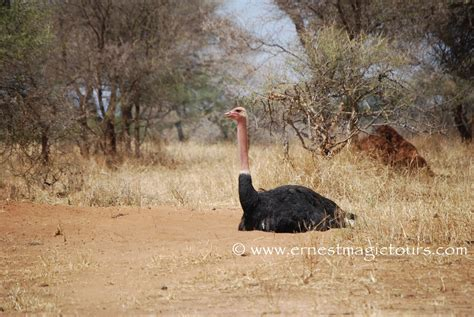 A Safari In Africa Provides Unforgettable Adventures