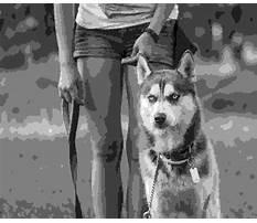 Best A better way dog training.aspx